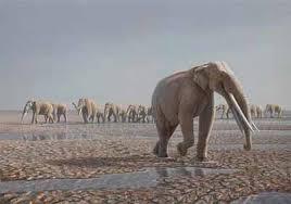 4-tusk-elephant